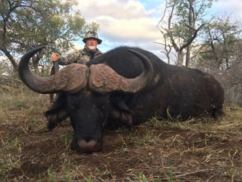 Cape Buffalo Hunting Africa Hunt Lodge