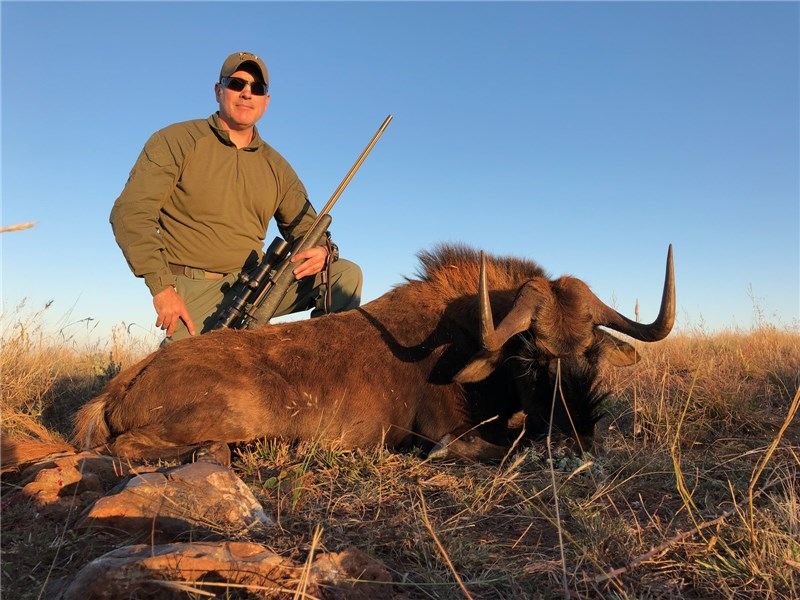 Black Wildebeest Hunt